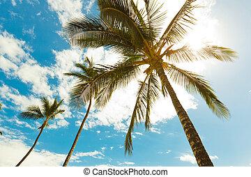 palmträdar, hos, solnedgång