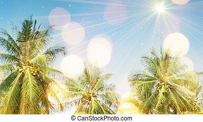 palmträdar, och, solljus