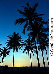 palmträdar, silhuett, med, solnedgång
