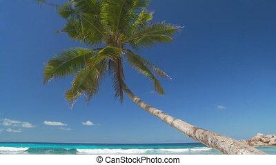 beautiful palmtree hanging over the ocean