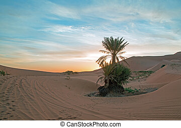 Palmtree in the middle of the Sahara desert in Morocco at...