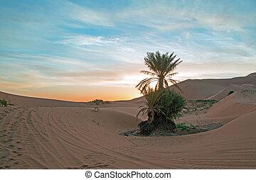 palmtree, meio, de, a, deserto saara, em, marrocos, em,...