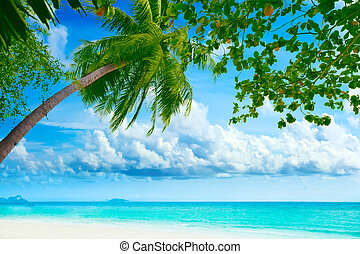 Beautiful tropical beach with palmtree on foreground