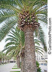 Palmtree on the beach in Italy