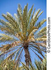 Palmtree