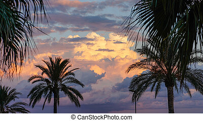 Palmtrees and Sunset