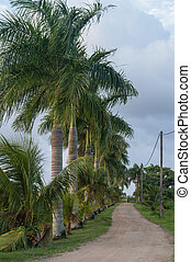 Palmtrees at Rust en Werk Plantation Suriname