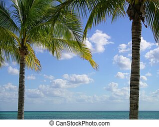Palmtrees II - Palm trees framing a view of blue sky with ...