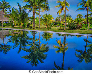 Palmtrees reflected in a Tranquil pool.