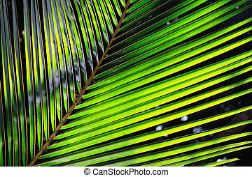 Palmy Leaf - Bright green palm leaf illuminated by the sun