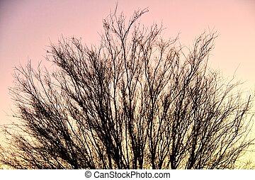 Palo Verde Silhouette