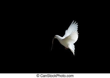 paloma, blanco, vuelo