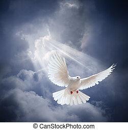 paloma, en el aire, con, alas, abierto de par en par