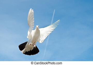 paloma, en, el, cielo