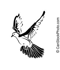 paloma, negro y blanco