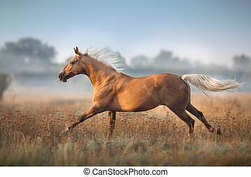 Palomino horse in fog morning