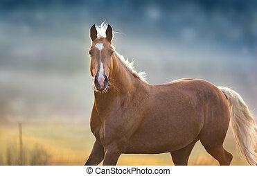 Palomino horse portrait in fog meadow
