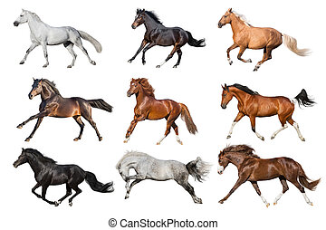 Palomino,red, bay, white, buckskin horses collague run isolated