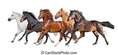 Palomino,red, bay, white,buckskin horses run isolated