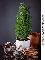 palos, cup., conos, árbol, pino, canela, arcilla, navidad