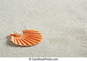 palourde, macro, perle, sable, coquille, plage blanche