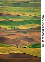 Palouse-American Tuscany - Picture taken from top Steptoe ...