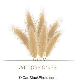 Pampas golden grass copy space on stripe. Vector ...
