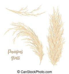 Pampas grass golden. Vector illustration. panicle Cortaderia...