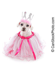 Pampered princess pooch wearing a pale pink tulle dress and bejewelled crown. Party, halloween, etc. White background.