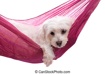 Pampered puppy dog relaxes in a pretty pink purple gold hammock