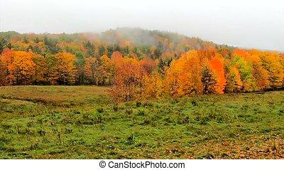 Pan Across Fog Blowing In Across Vibrant Hillside During...