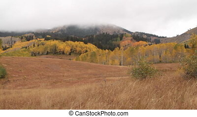 pan across mountain meadow with yellow aspens and forest