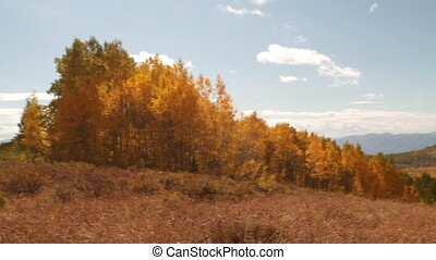 pan across mountain meadow with yellow aspens