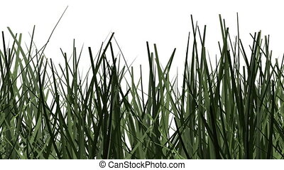 pan and zoom camera - Green grass against white background