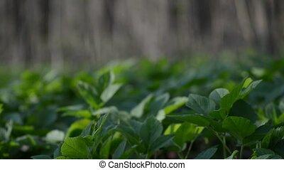 Pan Left Along the Green Vegetation