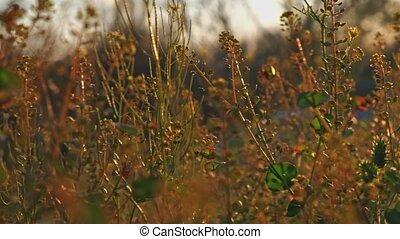 Pan macro shot of wild grass 4k UHD