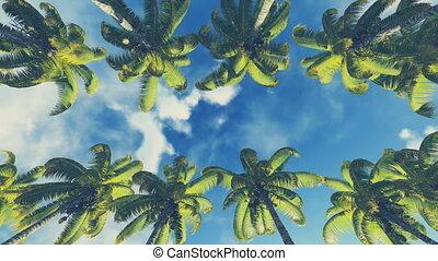 Pan motion through palm alley