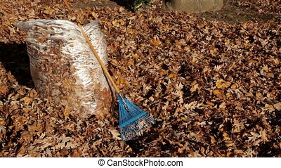 Pan of Autumn Leaves in Bag