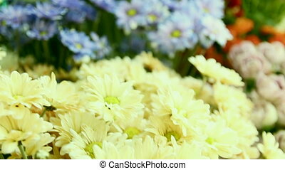 Pan over beautiful flowers in flower shop. - Pan over...