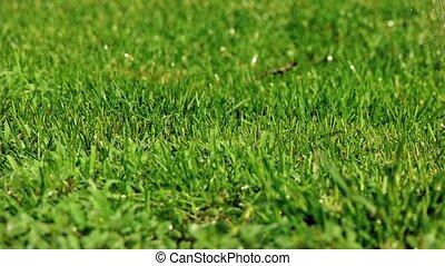 Pan shot of diy lawn sprinkler slomo - Pan shot of diy lawn...