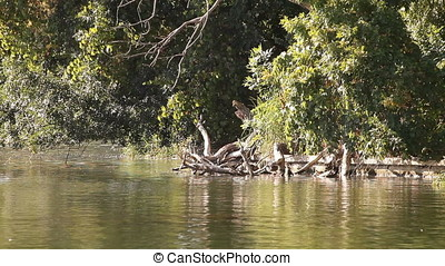 Pan Shot of Willow Trees and Pond - Pan shot of pond and...