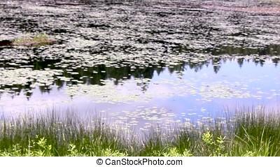 pan through a pond - pan through a reflective grassy pond