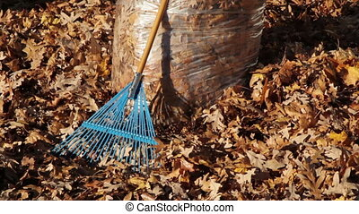 Pan Up of Autumn Leaves in Bag
