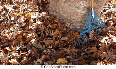 Pan Up of Autumn Leaves in Bag with Rake