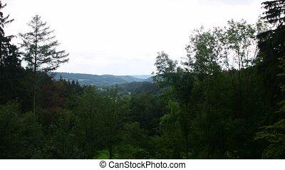 Pan view of summer landscape. Coniferous trees