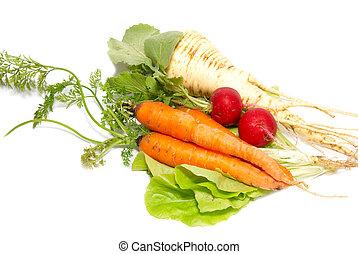panais, white., salade verte, isolé, radis, carottes, vert