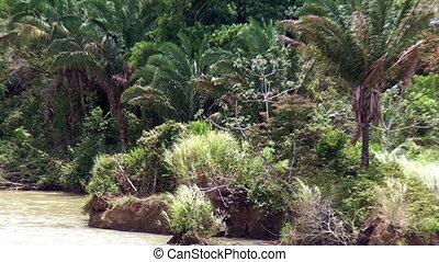 Panama-Gatun Lake, Green vegetation