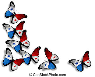 Panamanian flag butterflies, isolated on white background