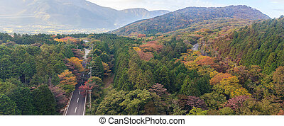 Panaroma of beautiful forest of autumn leaves in Hakone, ...
