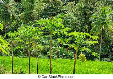 panay, 野生, 森林, フィリピン。, 島